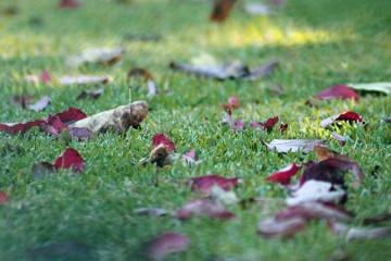 Soufflage de feuilles mortes