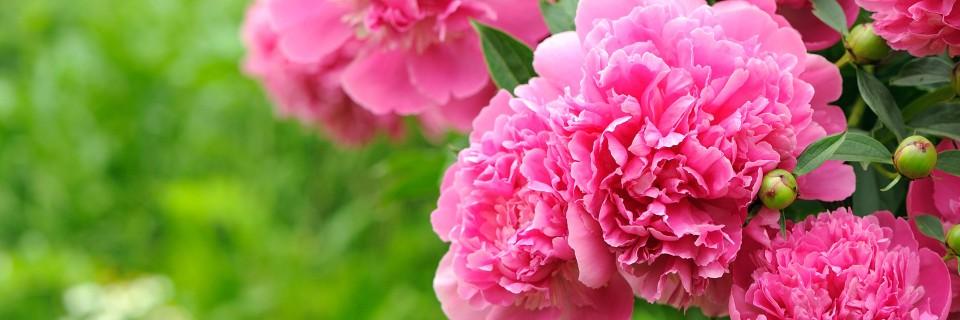 Confiez le soin de votre jardin à un professionnel !